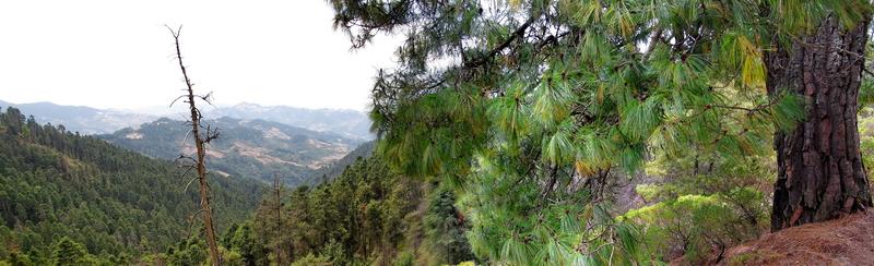Panoramica-Sierra-Chincua1.1-800