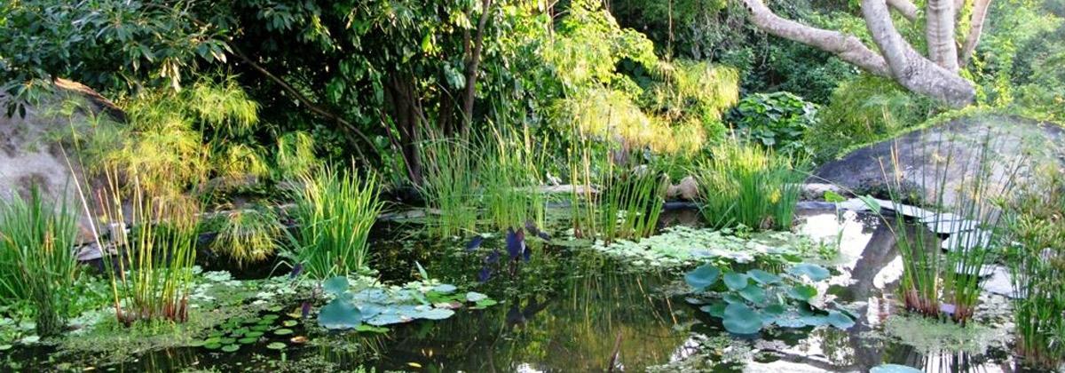 El jard n botanico de acapulco desc brelo bromo turismo for Arboles del jardin botanico